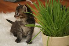 Free Small Kitten Stock Photos - 2318313