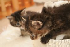 Free Small Kittens Stock Photo - 2318320