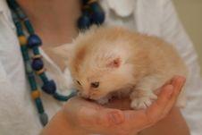 Free Small Kitten Royalty Free Stock Photos - 2318418