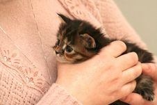 Small Kitten Stock Images