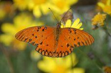 Tropical Beauty Royalty Free Stock Photo