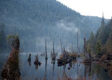 Free Spooky Lake Stock Photo - 2319900