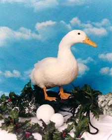 Free Christmas Duck Stock Image - 23101221
