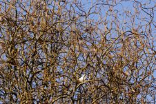 Free Confusing Tree Stock Photos - 23101803