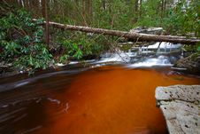 Free Natural Tannin Colored Stream In The Mountains Royalty Free Stock Images - 23101929