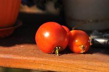 Free Fresh Ripe Tomatoes Royalty Free Stock Image - 23102006