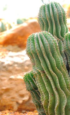 Free Cactus Stock Image - 23108891