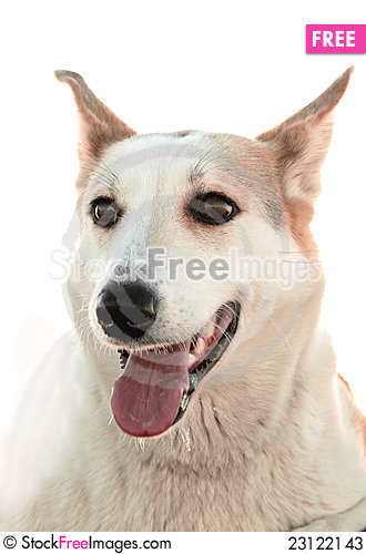 Free Portrait Of A Dog. Stock Photos - 23122143