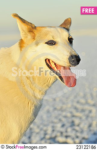 Free Portrait Of A Dog. Royalty Free Stock Image - 23122186