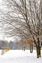 Free Snowy Day In The Park Stock Photos - 23148643