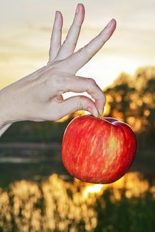 Free Red Apple At Sunset Stock Image - 23140821