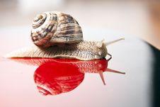 Free Snail Stock Photo - 23144510