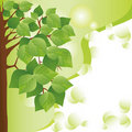 Free Eco Background With Tree. Place For Text Stock Photo - 23162450