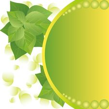 Free Eco Background With Fresh Green Leaves And Sun Royalty Free Stock Images - 23162439