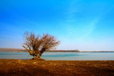Free Lonely Tree Near Water Royalty Free Stock Images - 23169889