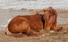 Free Brown Horse Lies On The Cold Ground Stock Photo - 23173110
