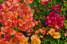 Free Colorful Kertas &x28;Paper Flower&x29; Stock Photography - 23174352