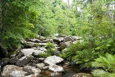 Free Stream In A Heart Of Rain Forest Stock Photography - 23175002