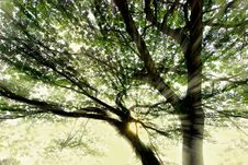 Free Sunrays Break Through Tree Branches Royalty Free Stock Images - 23181699