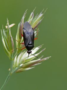 Free Grass Bug Stock Photo - 23185440