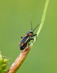 Free Grass Bug Royalty Free Stock Photo - 23185505