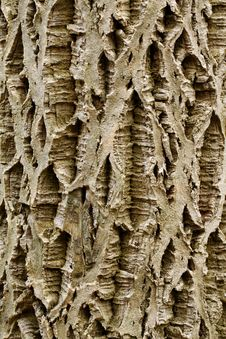 Free Bark Stock Photos - 23186353