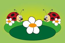 Funny Picture Of Two Ladybug Royalty Free Stock Image