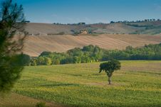 Free Panoramic Sunset Landscape Fields In Italy Stock Photos - 23190043