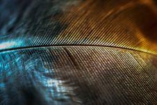 Two Tone Feather Stock Photos