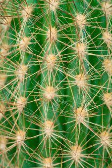 Free Cactus Macro Royalty Free Stock Image - 23193466