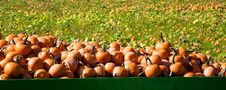 Free Picked Pumpkins On A Trailer Stock Photography - 23194272