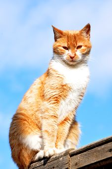 Free Orange Cat Stock Photo - 23196100