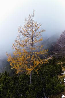 Free View To Larch Stock Photography - 23197932