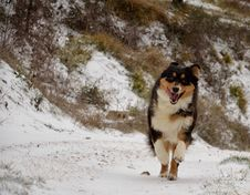 Free Dog Running In Snow Royalty Free Stock Photo - 23198185