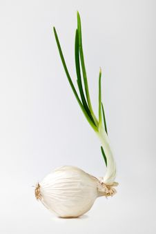 Free Onion On White Stock Photo - 23198500