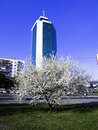 Free Business Building Apple Tree Royalty Free Stock Photo - 2320335