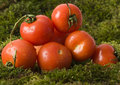 Free Tomatos On The Moss Stock Image - 2321251