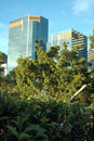 Free Skyscrapers In Jungle Stock Photos - 2326053