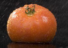 Free Tomato Stock Images - 2321194