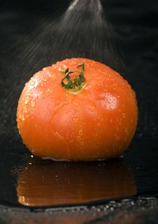 Free Tomato Royalty Free Stock Image - 2321196