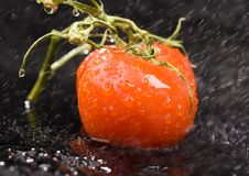 Free Tomatos Stock Image - 2321241