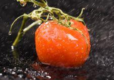 Free Tomatos Stock Image - 2321241