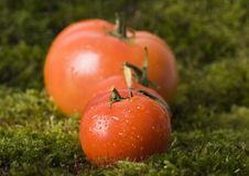 Free Tomatos On The Moss Royalty Free Stock Image - 2321246