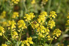 Free Yellow Wild Flowers Royalty Free Stock Photos - 2321828