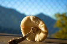 Free Mushroom Stock Photography - 2322532