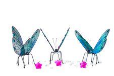 Free Butterflies Gathering Around Royalty Free Stock Image - 2325216