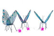 Free Butterflies Gathering Around Stock Photo - 2325220