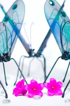 Free Butterflies Gathering Around Stock Images - 2325354