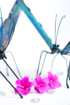 Free Butterflies Gathering Around Royalty Free Stock Photography - 2325367