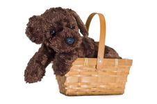 Free Cute Isolated Puppy And Basket Stock Images - 2325394